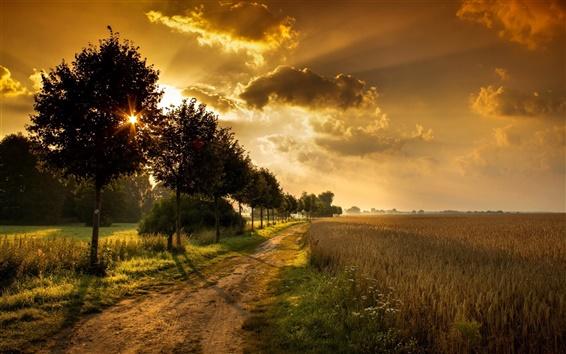 Wallpaper Sunset, road, trees, fields