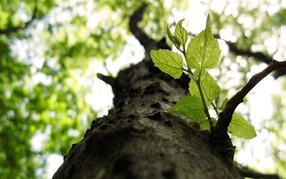Wallpaper Tree, twigs, leaves