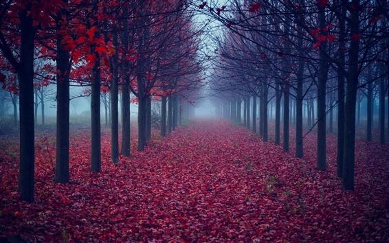 Fondos de pantalla Árboles, hojas de color rojo, por carretera, niebla, otoño