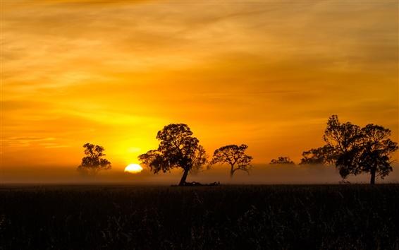 Wallpaper Trees, sunrise, fog, mist, silhouette, Penola