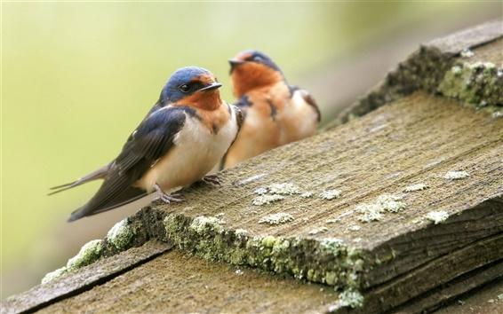 Papéis de Parede Dois pássaros, verão, placa