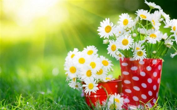 Wallpaper White daisy flower, cup, grass, summer, sunlight