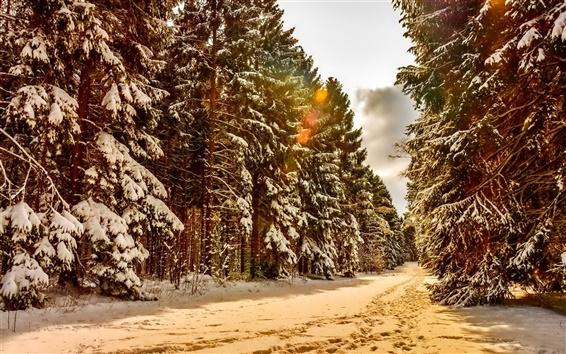Papéis de Parede Inverno, neve, árvores, floresta, trilhas
