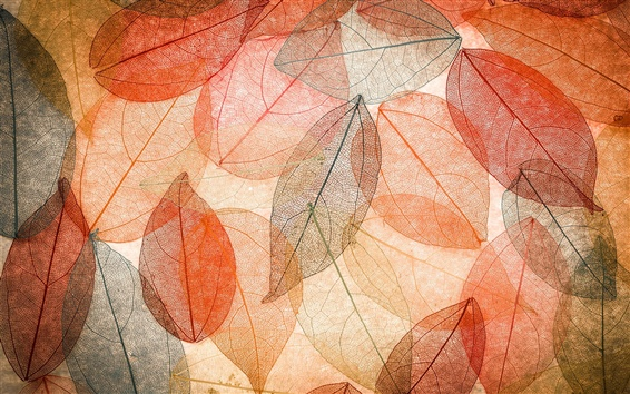 Wallpaper Autumn, transparent leaves, abstract, colorful