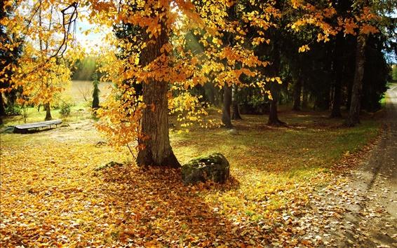Обои Осень, деревья, желтые листья, путь, солнечные лучи