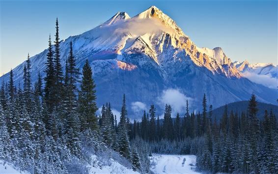 Papéis de Parede Parque Nacional de Banff, Alberta, Canadá, montanhas, árvores, neve, abeto vermelho