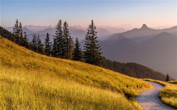 Fond d'écran Bavière, Allemagne, Alpes, route, herbe, arbres