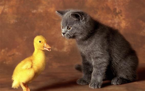 Papéis de Parede Gato preto com pato amarelo