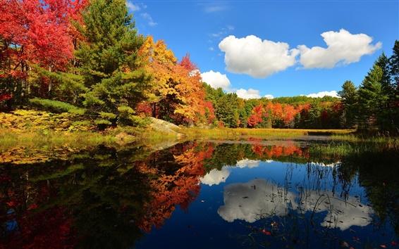 Обои Облака, лес, озеро, деревья, осень