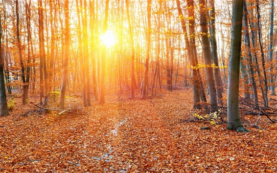 Wallpaper Forest, autumn, sun rays, trees, leaves