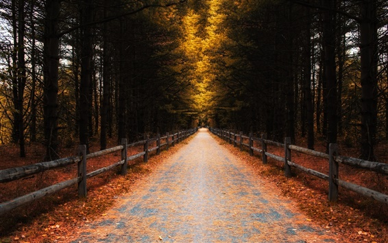 Wallpaper Forest, trees, leaves, autumn, road, fence
