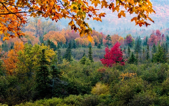 Wallpaper Forest, trees, leaves, autumn
