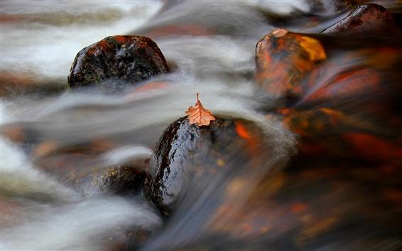 Wallpaper Leaf, river, stream, stones