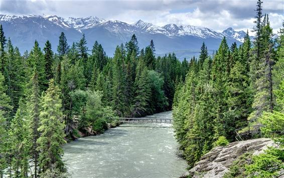 Fond d'écran Maligne Canyon, Alberta, Canada, pont, rivière, arbres