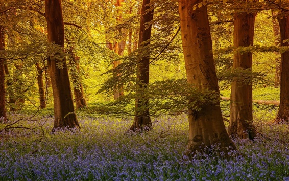 Wallpaper North Yorkshire, England, trees, flowers