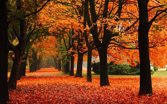 Wallpaper Park, alley, trees, autumn, red leaves