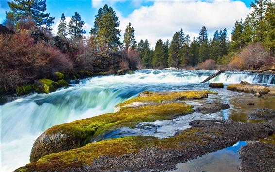 Fond d'écran Rivière, ruisseau, rochers, forêt