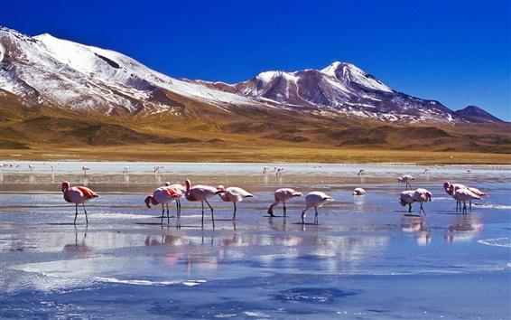 Wallpaper Snow, mountains, lake, birds, flamingos
