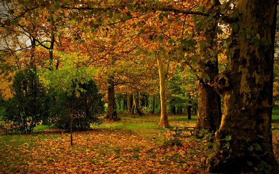 Wallpaper Spain, Madrid, Campo, autumn, park, leaves, trees, nature