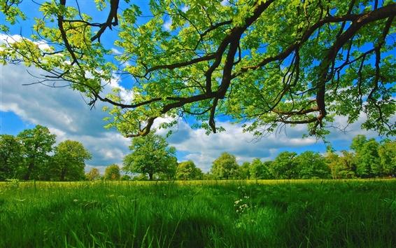 Обои Лето, луг, деревья, трава, зеленый