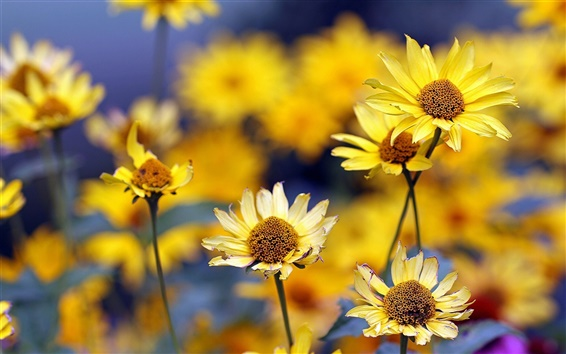 Wallpaper Summer, yellow flowers, blurring