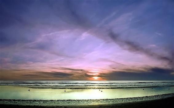 壁紙 サンセット、海、空、ビーチ、鳥