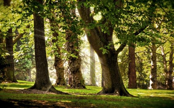 Обои Деревья, трава, утро, лучи солнца