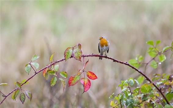 Papéis de Parede Galhos, folhas, espinhos, pássaro, gotas da água, chuva