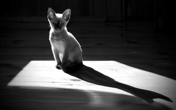 Wallpaper White kitten, shadow, silhouette