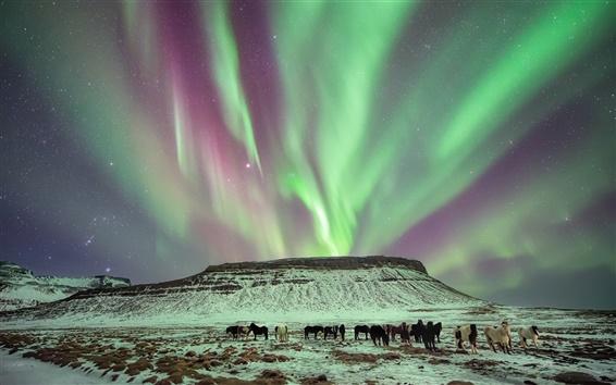 Fond d'écran Hiver, lumière du nord, les chevaux, le crépuscule