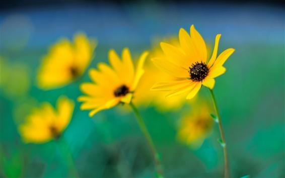 Wallpaper Yellow flowers close-up, focus, bokeh