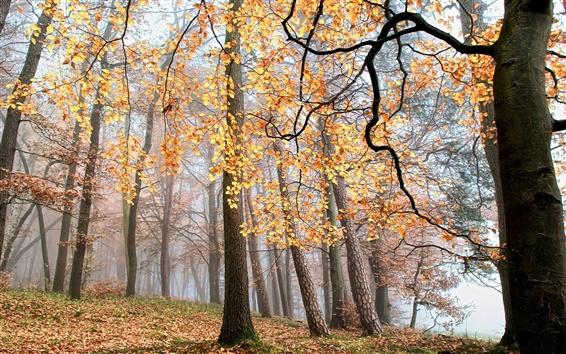 Fond d'écran Automne, la forêt, les arbres, les feuilles jaunes, brouillard