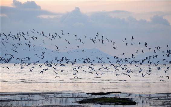 Обои бухта, туман, восход солнца, птицы, облака