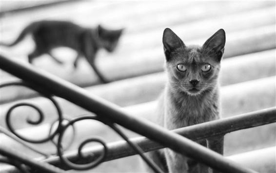 Wallpaper Black cat, railings, stairs