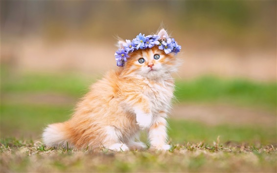 壁紙 かわいい子猫、ふわふわ、花、花輪