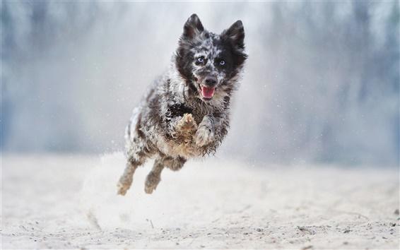 Обои Собака работает и прыгать, боке
