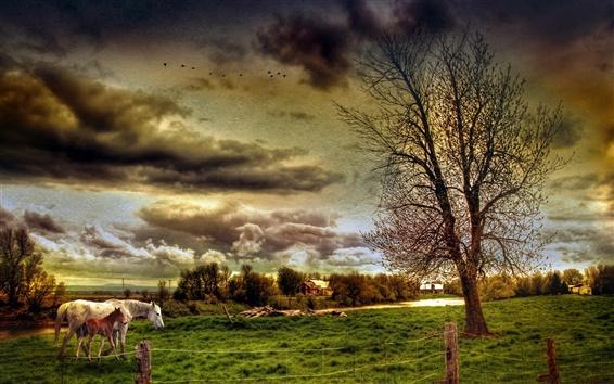 壁紙 ファームフィールド、馬、木、家、雲、HDRスタイル