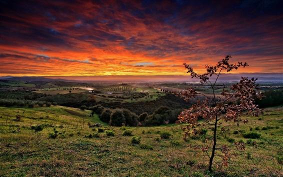 Обои Сельскохозяйственные поля, деревья, трава, красный небо, облака, закат