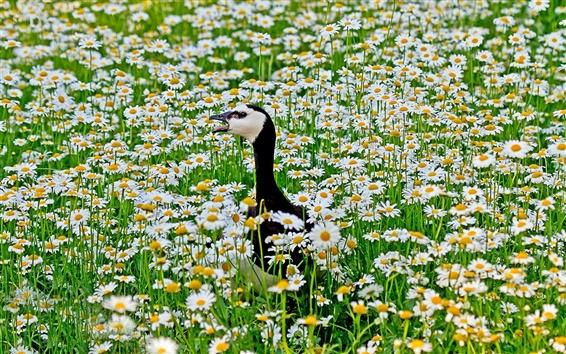 Wallpaper Flowers field, chamomile, bird