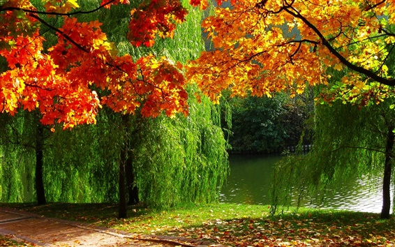 Wallpaper Forest, autumn, leaves, river