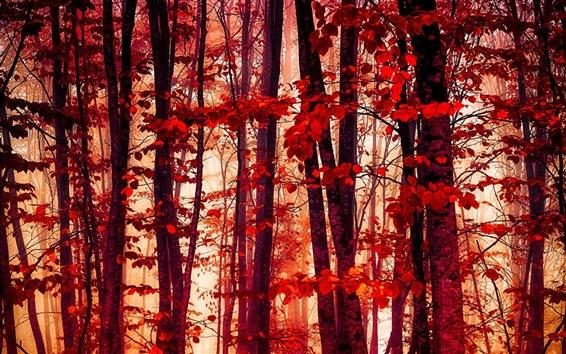 Fond d'écran Forêt, les arbres, les feuilles rouges, automne