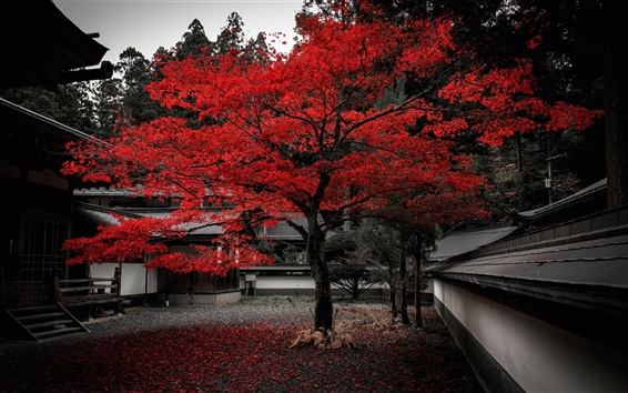Wallpaper Japan, house, tree, red leaves, autumn