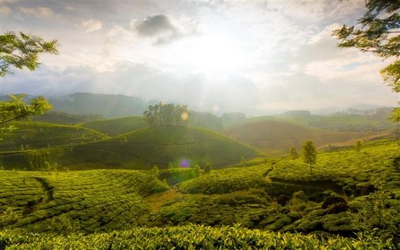 Wallpaper Morning, green fields, sunrise, trees, clouds