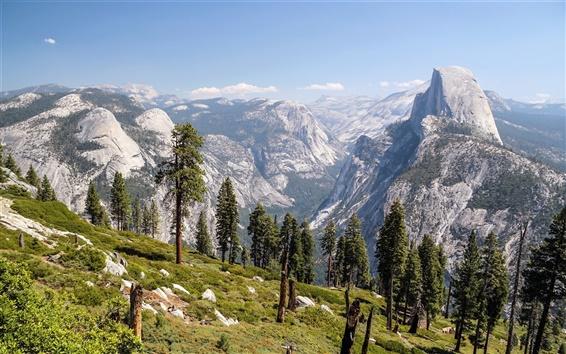 Wallpaper Mountains, trees, valley, Yosemite National Park, California, USA