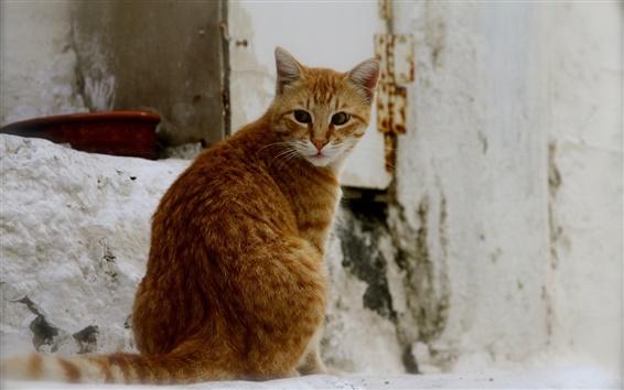 Wallpaper Orange cat look back