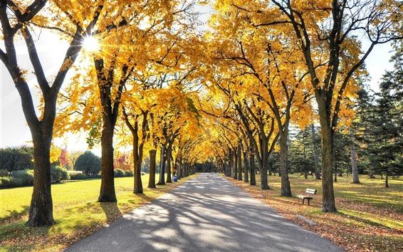 Wallpaper Park, sun rays, walkway, trees, leaves, autumn