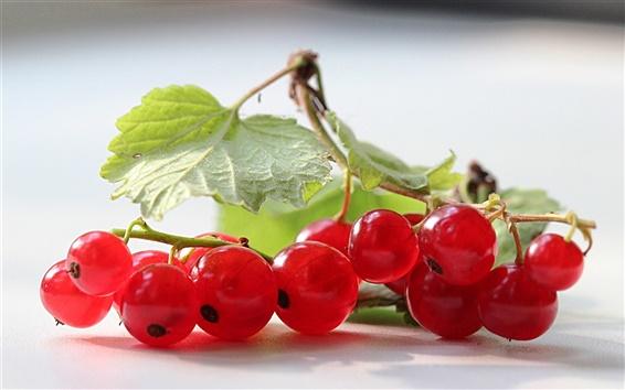 Wallpaper Red berries, leaves