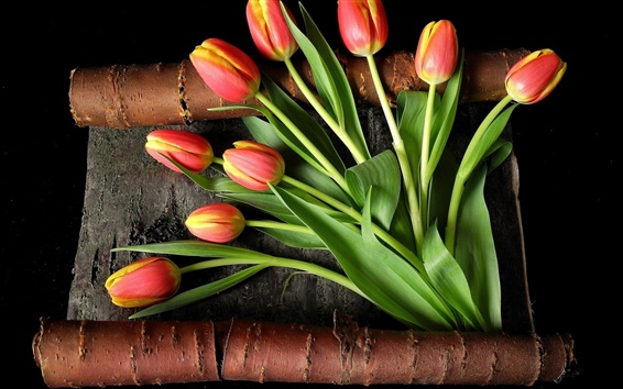 Wallpaper Red yellow petals, tulips, bark, black background