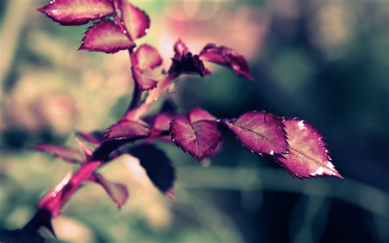 Wallpaper Rose leaves, purple
