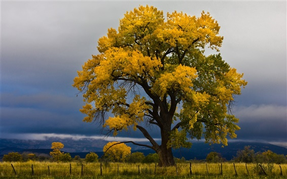 Wallpaper Sky, clouds, field, big tree, grass, autumn